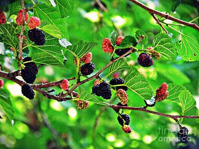 Photograph - Mulberry Summer by Sarah Loft