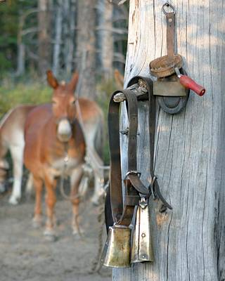 Photograph - Mule Bells by Diane Bohna