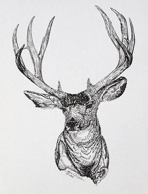 Mule Deer Drawing - Mule Deer Buck by Lana Tyler