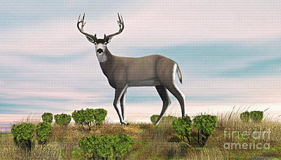 Digital Art - Mule Deer Buck by Walter Colvin