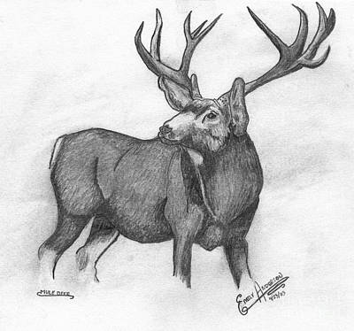Mule Deer Drawing - Mule Deer by Emily Boehm