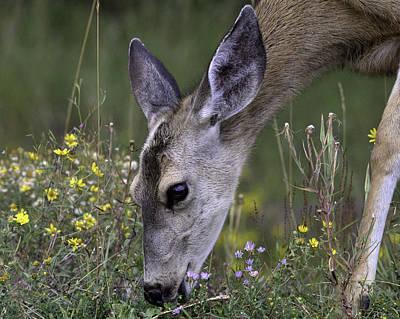 Photograph - Mule Deer In Flowers by Elizabeth Eldridge