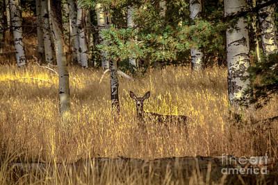 Mule Deer In The Aspens Art Print by Robert Bales
