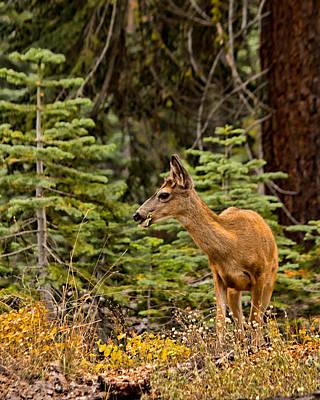 Photograph - Mule Deer In Yosemite by Kristia Adams