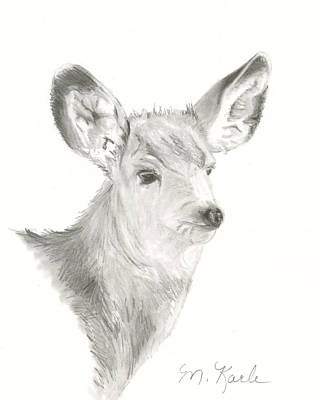 Drawing - Mule Deer by Marsha Karle