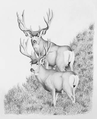 Photograph - Mule Deer Study by Darcy Tate