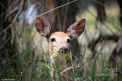 Photograph - Mule Deer by Susan Herber