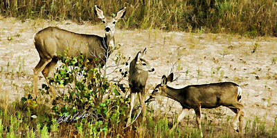 Photograph - Mule Doe And Her Twins by Bill Kesler