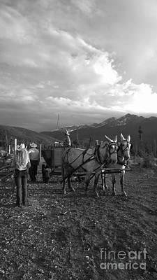 Photograph - Mule Drawn Wagon by Jennifer E Doll