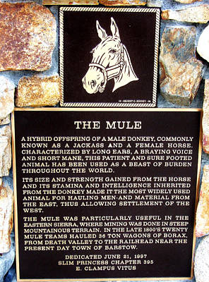 Photograph - Mule Plaque by Marilyn Diaz