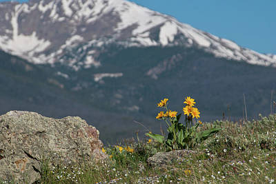 Photograph - Mule's Ear With Mountain Backdrop by Cascade Colors