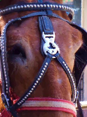 Photograph - Mules' Eye by Kathy K McClellan