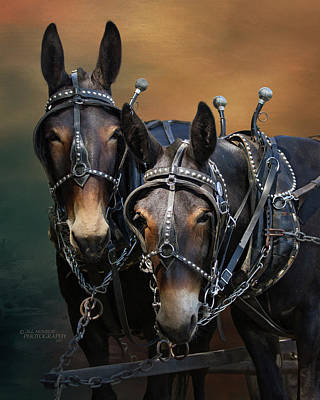 Photograph - Mules by Jill Monroe