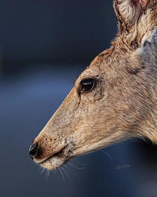 Photograph - Muley Headshot by Bill Kesler