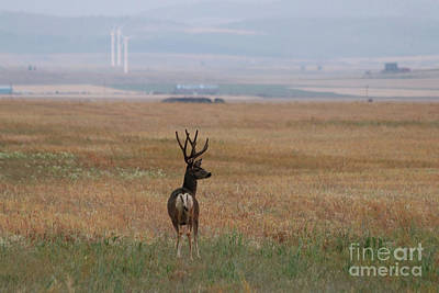 Photograph - Mulie Buck by Alyce Taylor