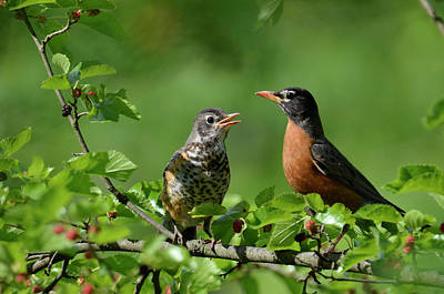 Photograph - Mullberry Conversation by Ann Bridges