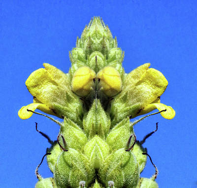 Photograph - Mullein Flower Pareidolia by Constantine Gregory