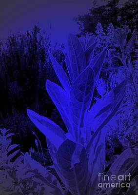 Mullein In The Moonlight Art Print by JoAnn SkyWatcher