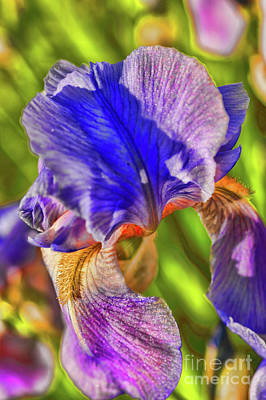Photograph - Multi Color Iris by Rick Bragan