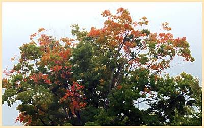 Photograph - Multi-color Treetop by Ellen Barron O'Reilly