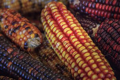 Photograph - Multi Colored Indian Corn Landscape by Joni Eskridge