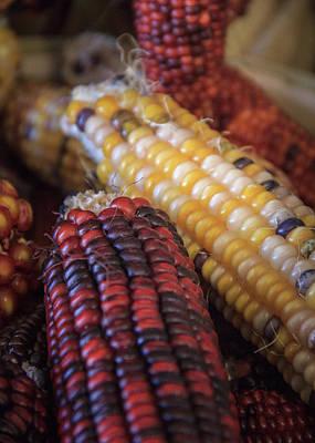 Photograph - Multi Colored Indian Corn Portrait by Joni Eskridge