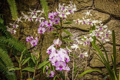 Photograph - Multi Colored Orchid Bush by Daniel Hebard