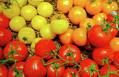 Photograph - Multi Colored Tomatoes by Robert Meyers-Lussier