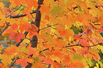 Digital Art - Multi Colors Of Maple Leaves  by Lyle Crump