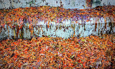 Photograph - Multi Coloured Seaweed by Lexa Harpell