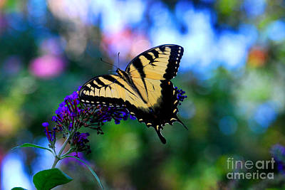 Butterflies Photograph - Multicolor Butterfly by Terri Creasy