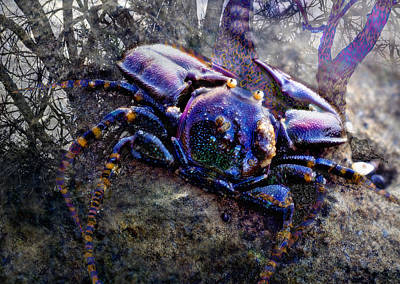 Photograph - Multicolor Crab by Adria Trail