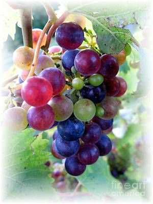 Multicolor Grapes Art Print