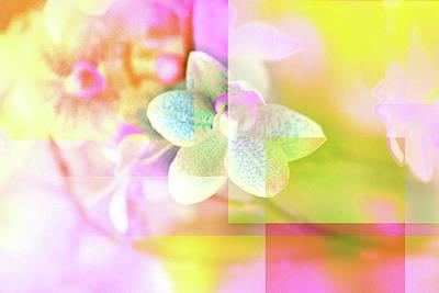 Photograph - Multicolor Orchids by Lali Kacharava