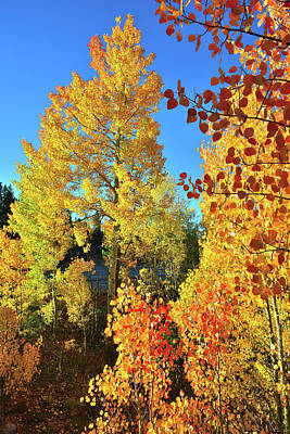 Photograph - Multicolored Aspens At Dillon Reservoir by Ray Mathis