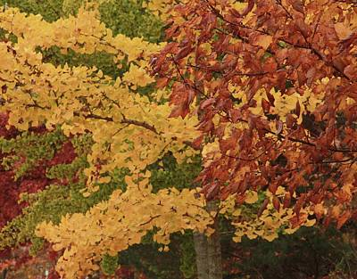 Photograph - Multicolored Autumn Leaves by Dan Sproul