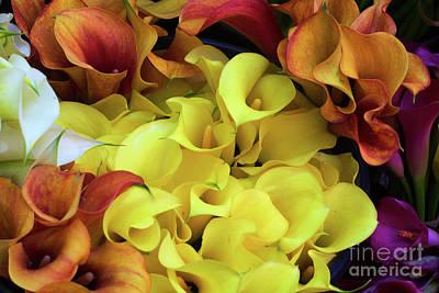 Photograph - Multicolored Calla Lillies by Bruce Block