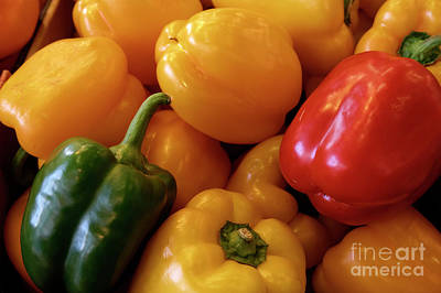 Photograph - Multicolored Peppers by John  Mitchell