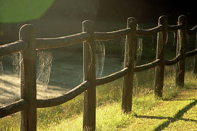 Photograph - Multiple Spiderwebs On Wooden Fence by Emanuel Tanjala