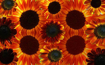 Fushia Photograph - Multiples Of Sunflowers by Tina M Wenger