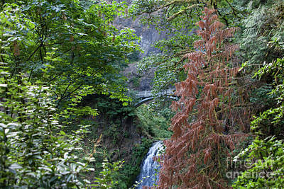 Photograph - Multnomah Falls In The Columbia River Gorge In Oregon 5d3592 by Wingsdomain Art and Photography