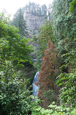 Photograph - Multnomah Falls In The Columbia River Gorge In Oregon Dsc6546 by Wingsdomain Art and Photography