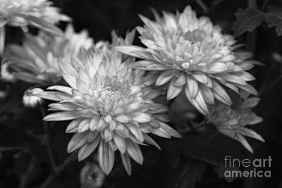 Photograph - Mum Beauty by Mary Haber