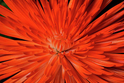 Photograph - Mum On Fire by Judy Vincent
