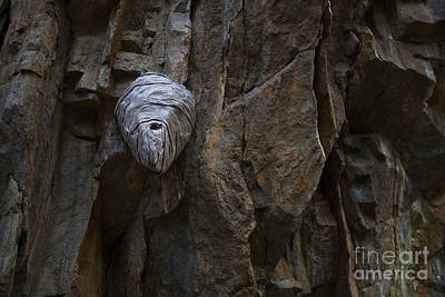 Photograph - Mummy Head by Barbara Schultheis
