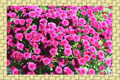 Digital Art - Mums And Basket Weave by Donna Munro