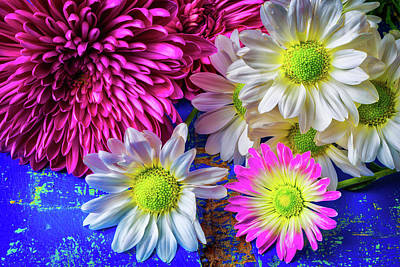 Pom Pom Photograph - Mums And Daises by Garry Gay
