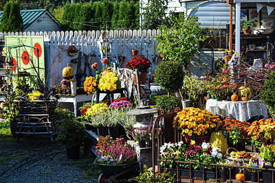 Photograph - Mums And Pansies For Sale In October  by Tom Cochran