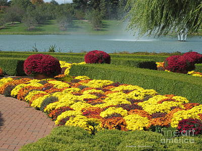 Photograph - Mums By The Lake by Kathie Chicoine