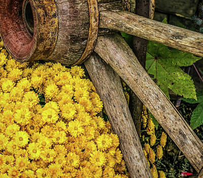 Digital Art - Mums by Elijah Knight